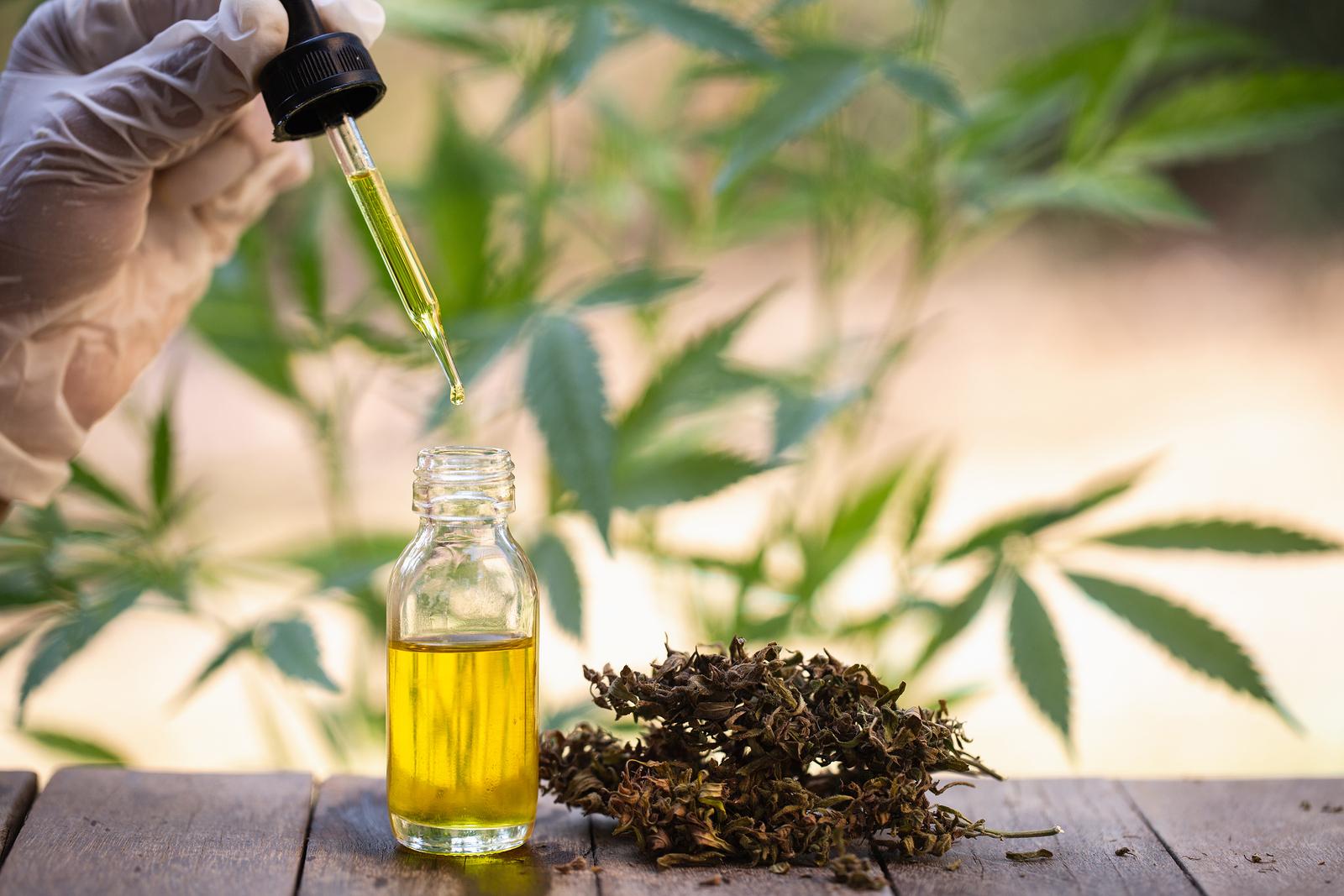 Как получить масло из конопли можно ли курить марихуану при раке